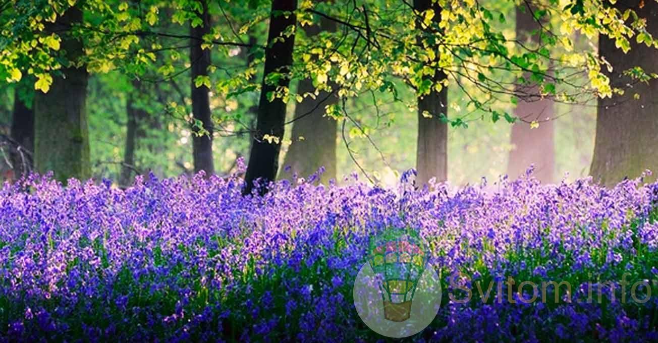 bellsinthedockywoodforest.jpg (172.53 Kb)