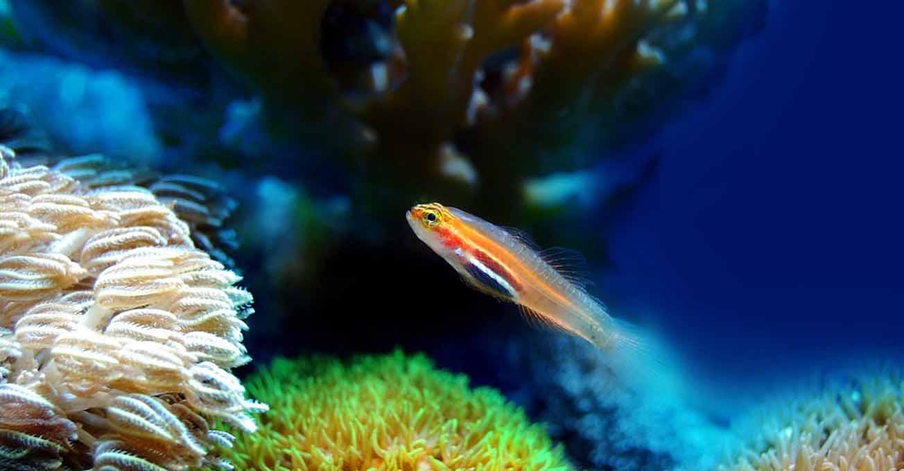 coralreef.jpg (.8 Kb)