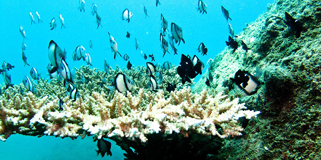 diving_nhatrang.jpg (332.46 Kb)