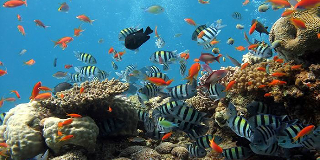 diving_phuquoc.jpeg (226.77 Kb)
