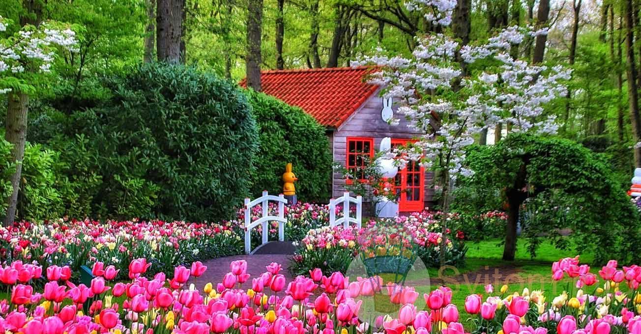 flowerfestivalstakeplaceinkeukenhofpark1.jpg (240.1 Kb)