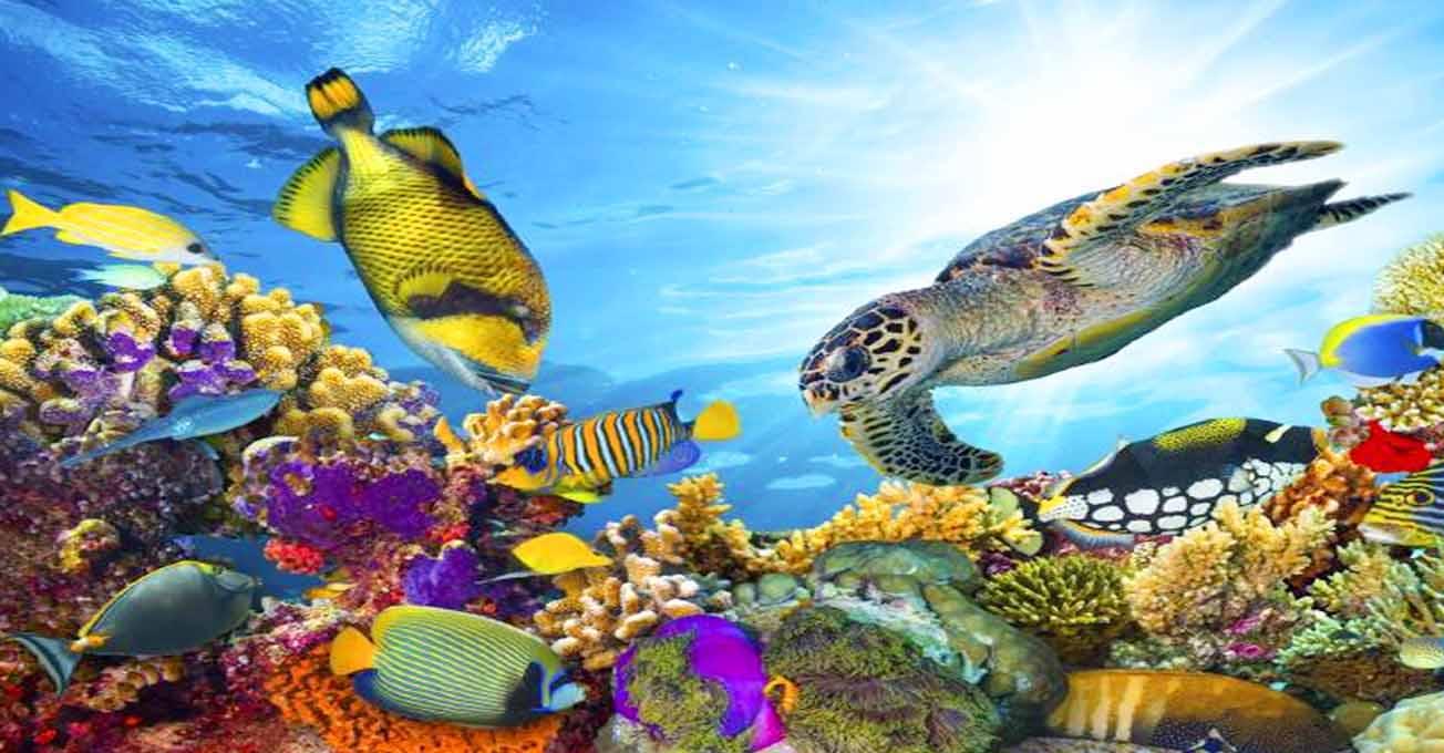 great_barrier_reef.jpg (108.27 Kb)