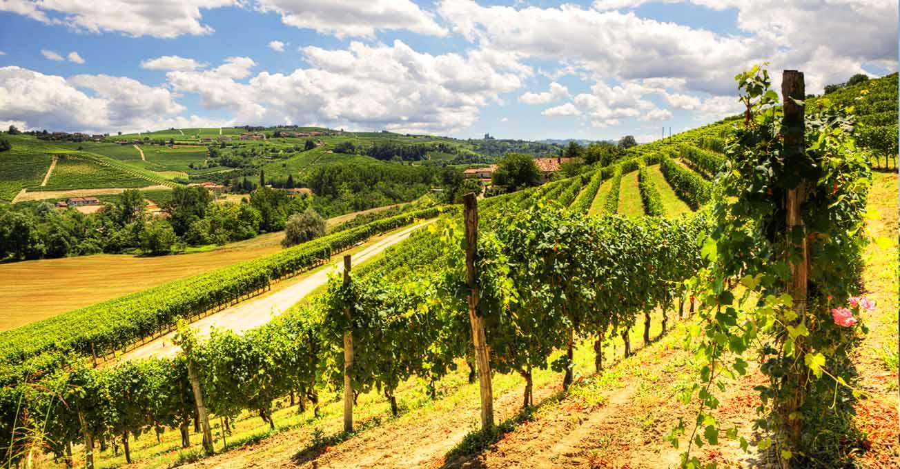 italy_wine.jpg (153.88 Kb)