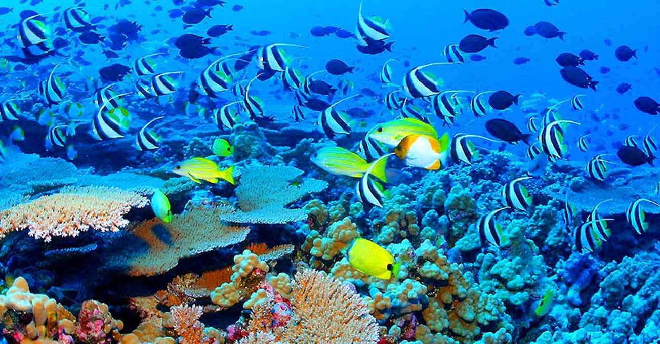 В Італії виявили унікальний кораловий риф