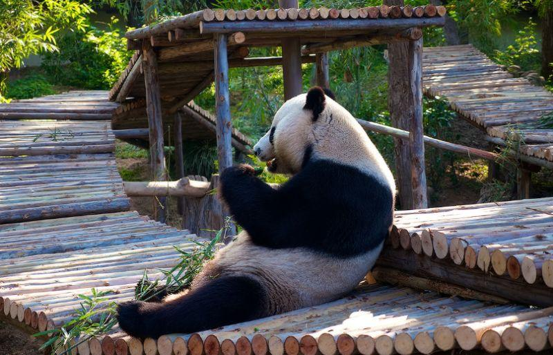 pekinstkii_zoopark.jpg (96.61 Kb)