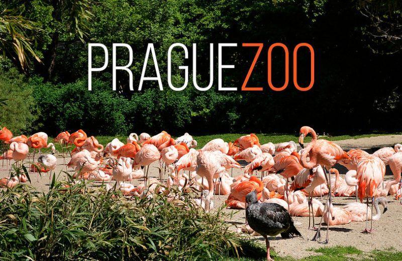 praga_zoopark.jpg (123.92 Kb)