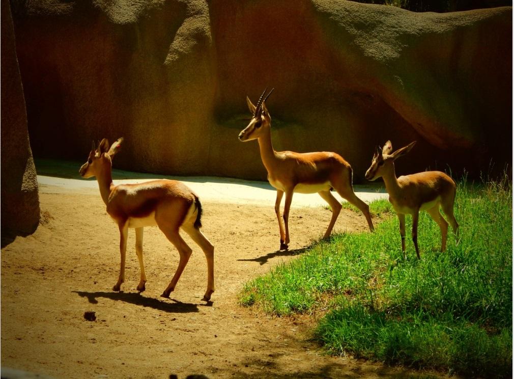 Найкращі зоопарки світу (30 фото)