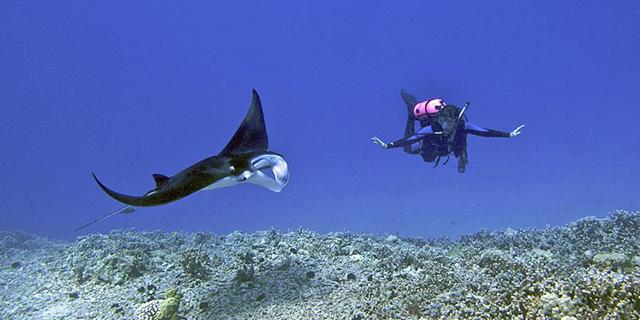 similan_diving.jpg (168.69 Kb)