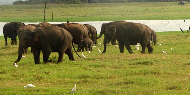 slony.jpg (282.68 Kb)