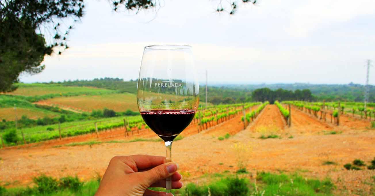 spain_wine.jpg (58.39 Kb)