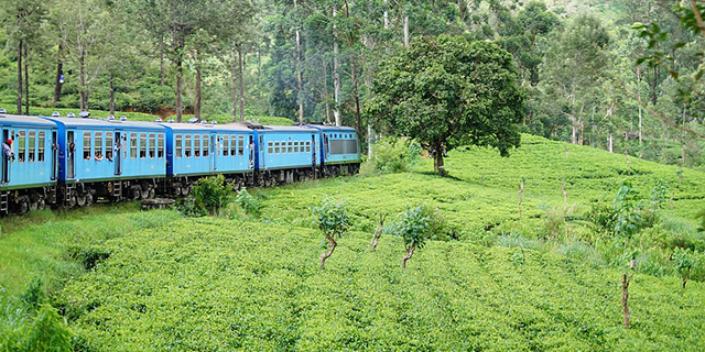 sri-lanka-train.jpg (293.97 Kb)