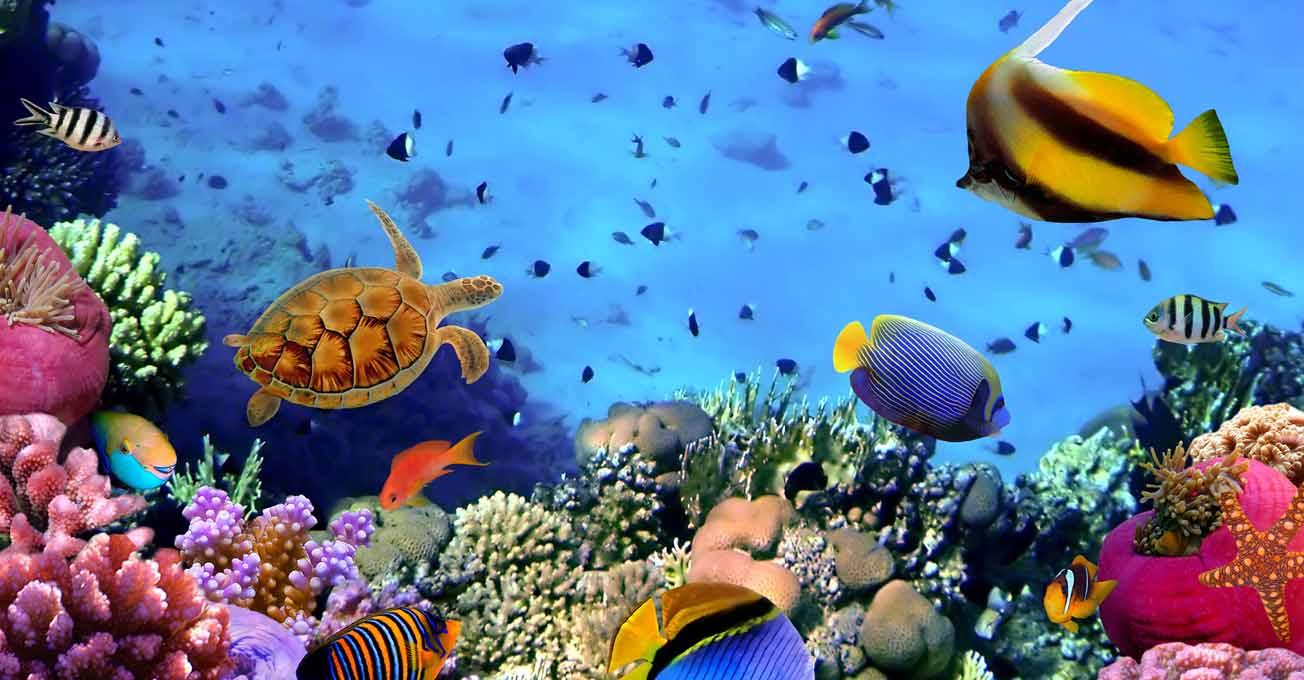 taba_diving1.jpg (103.71 Kb)