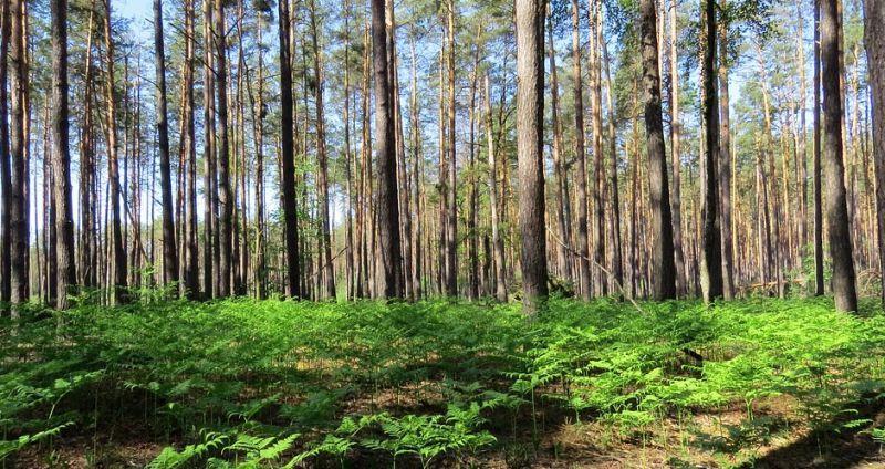 Весняні подорожі Україною. Частина 2